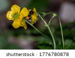 Bumblebee Laying Over Flowers...