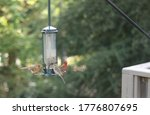 Backyard Bird Feeder Bird...