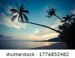 Silhouette Of A Palm Tree With...