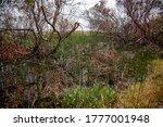 Landscape Image Of The Wetland...