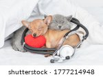 Gray Kitten And Toy Terrier...