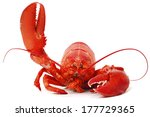 Hello Lobster Isolated On Whit...