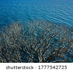 Dry Branched Tree On A...