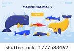marine mammals concept flyer ...
