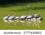Turtles Shells Warming Wood Log ...