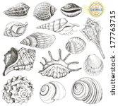 Collection Of Vector Seashells...