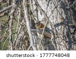 Picture Of Chipmunk Hiding In...