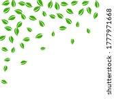 falling green leaves. fresh tea ...   Shutterstock .eps vector #1777971668