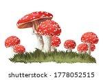 Fly Amanita Mushrooms In Grass...