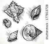 set of sketches of different...   Shutterstock . vector #177813728