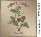 Garden Strawberry Aka Fragaria...