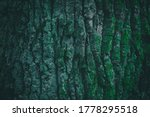 Dark Green Tree Bark Texture...