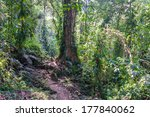 View Of The Jungle Near The...