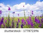 Purple Flower Field Background...