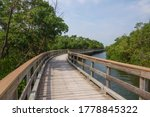 Perspective of long boardwalk curving out of sight near mangrove forest in a nature preserve, west central Florida, USA, for themes of conservation, recreation, escapism