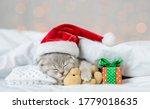 Baby Kitten Sleeping In Red...