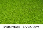 Duckweed On The Surface Of The...