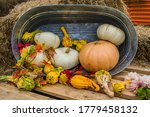 A Collection Of Fall Gourds.