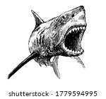 Shark With Open Mouth   Vector...