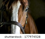 closeup of a horse in a stable | Shutterstock . vector #177974528