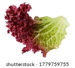 Red Salad  Lettuce Leaf  Lollo...