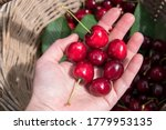 Fresh Sweet Cherries In A...