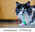 Fluffy  Grey And White Cat Wit...