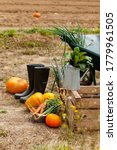 Autumn  Harvest Time....