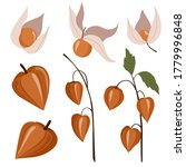 set of physalis peruviana... | Shutterstock .eps vector #1779996848