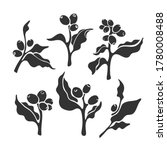 plant set. vector coffee branch.... | Shutterstock .eps vector #1780008488