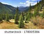Spruce And Pine Trees And...