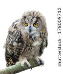Stock photo european eagle owl 178009712