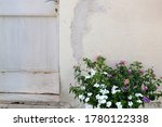 Flowers In A Pot And Rustic...