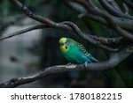 Budgerigar Parrot Is Sitting O...