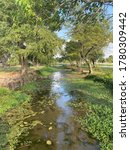 Small photo of Missy creek with trees surrounding