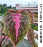 Small photo of Dehradun, banara wala, 21 july 2020, Floral leaf, with rainy climate.
