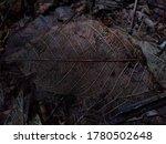 leaf skelton on the forest floor | Shutterstock . vector #1780502648