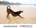 Alone Dog Near Sea