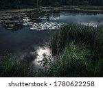 Moonlit Night In The Swamp....