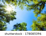 the canopy of tall trees... | Shutterstock . vector #178085396