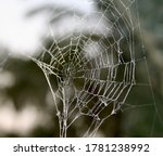 Macro Photo Of Spider Web In...