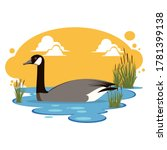 Canada Goose On Water...