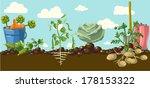 vintage garden banner with root ... | Shutterstock .eps vector #178153322