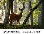 Red Deer In The Grass. Deer In...