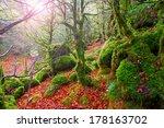 Stock photo autumn selva de irati fall beech jungle in navarra pyrenees of spain 178163702