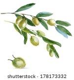 watercolor olivies  branch ... | Shutterstock . vector #178173332