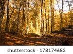 Autumn Forest. Park Road....