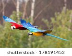 two parrots flying side by side ... | Shutterstock . vector #178191452