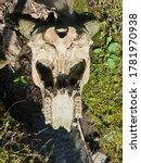 Bone Of Animal Skulls Bones An...