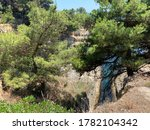 Lush Pine Trees On The Adriati...